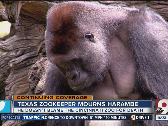 Texas zookeeper mourns the death of Harambe