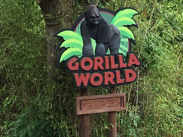 The Gorilla World Exhibit At The Cincinnati Zoo And Botanical Garden