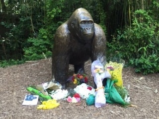 125K and counting sign 'Harambe's Law' petition