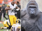 Steelers LB tweets dead gorilla joke