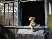 Dumpster puppy gets a second chance