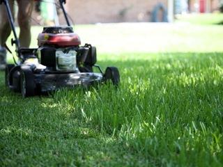 Indiana man mows TRUMP into lawn