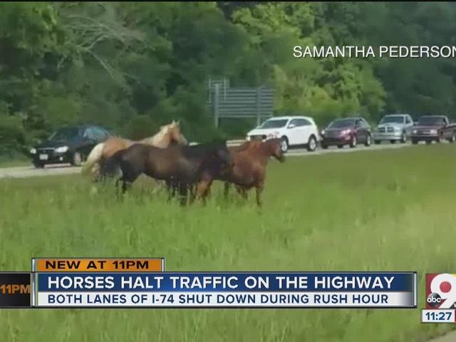 Horses halt highway traffic