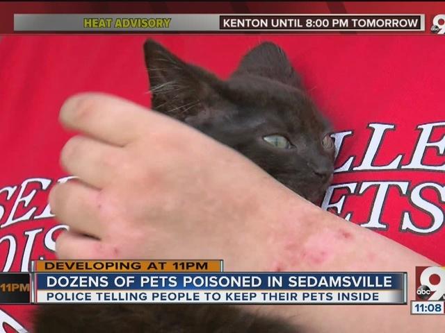 Rash of pet poisonings rocks Cincinnati neighborhood