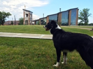 Dog patrols geese problem at Thomas More College
