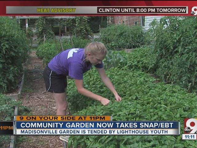 Madisonville Community Garden now takes SNAP/EBT