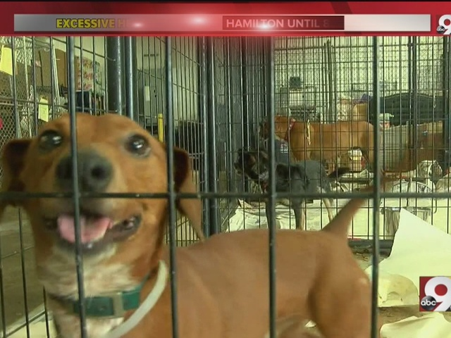 Local dog rescue in need of fans, air conditioning, for pups during…