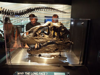 See How Answers In Genesis Finances Its Creation Museum