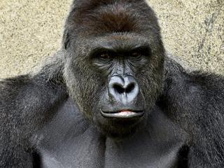 Harambe's death marked unceremoniously at zoo