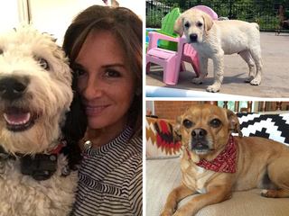 National Dog Day: Here are our newsroom pups