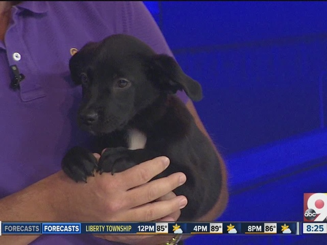 'Three Musketeers' puppies up for adoption