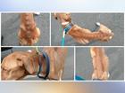 Sheriff: Malnourished dog may not survive