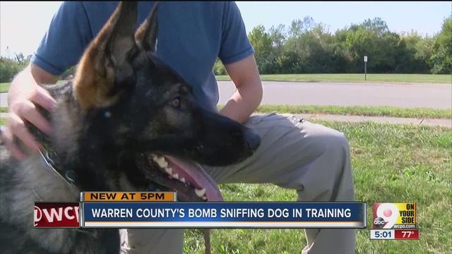 Dog Training Mason Ohio
