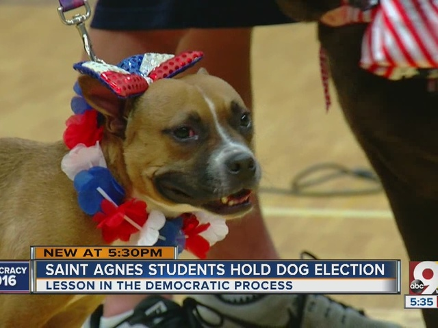 Saint Agnes students hold dog election