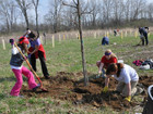 Can Cincy plant 2 million trees in 4 years?