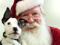Pooch's Santa photo can help other animals