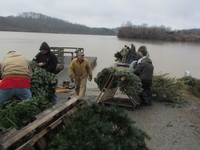 Your christmas tree could help kentucky 39 s fish wcpo for Ky fish and wildlife jobs