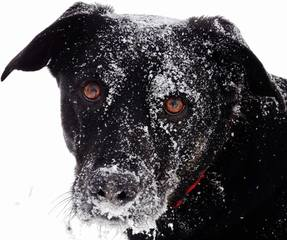 Your pets enjoy the snowy day