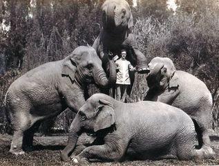 Where is Cincy's famous circus elephant buried?