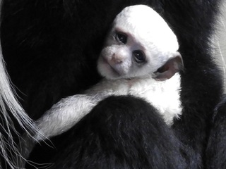 Meet the first zoo baby of 2017
