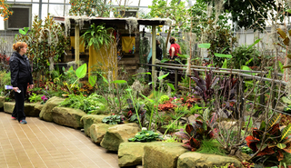 PHOTOS: Krohn Conservatory's Blooms on the Bayou