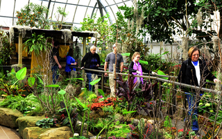 Krohn Conservatory's Blooms on the Bayou