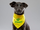 Pup from Hamilton rescue playing in Puppy Bowl