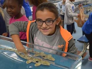 Aquarium will send sharks, stingrays to schools