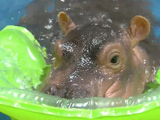 WATCH: Fiona's pool time is getting even cuter