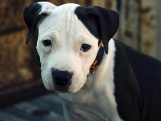 CDC: 18 Ohio illnesses linked to pet shop pups
