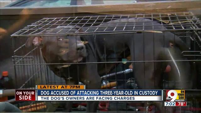 Dog accused of attacking 3-year-old is in custody