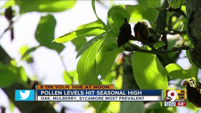 Tree pollen count in Greater Cincinnati at a new high for 2017