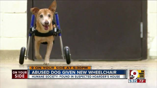 Abused dog Lt- Dan get a new wheelchair -- and a new lease on life