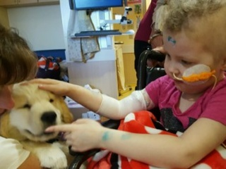 Local nonprofit brings puppy love to sick kids
