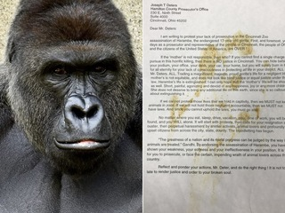 Remembering Harambe hysteria one year later