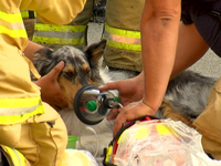 Firefighters rescue 3 dogs from burning home