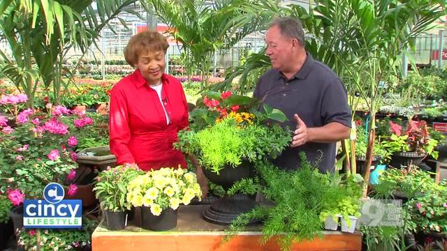 Cincy Lifestyle - Creating an Annual Planter