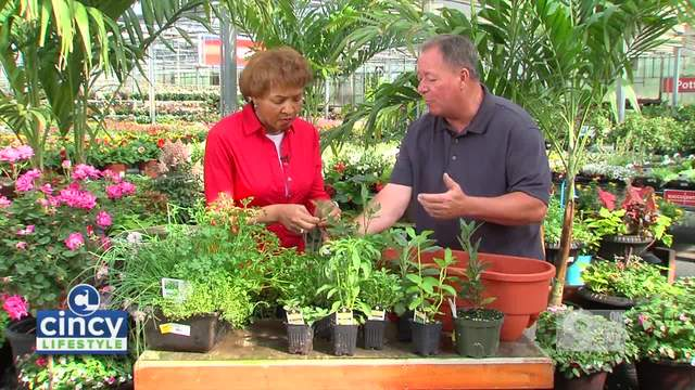 Cincy Lifestyle- Which Herbs to grow