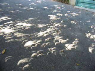 How to see 'eclipse through the trees'