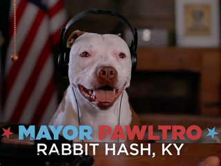 Rabbit Hash's dog mayor stars in ABC commercials