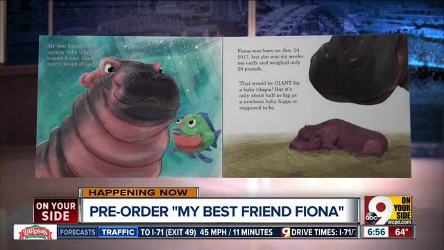 Fiona the baby hippo crashes couple's engagement photo at Cincinnati Zoo