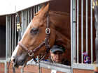 Kentucky could benefit from horse sales to China