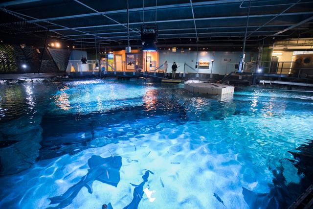 Free Winter Family Days at Newport Aquarium - Dayton ...