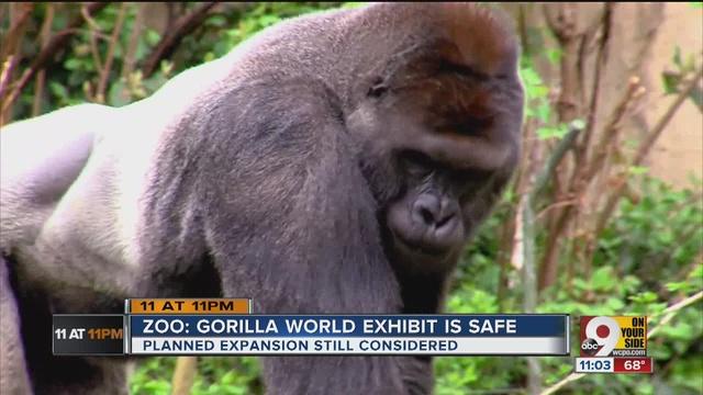 cincinnati zoo gorilla harambe what s next for gorilla exhibit and