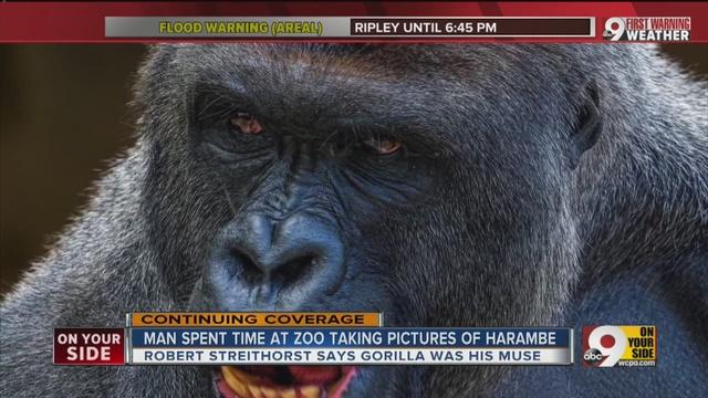 photographer says harambe s eyes personality brilliance shined
