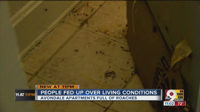 Apartment Complex Residents Say Theyu0027re Fed Up With Roaches, Problems