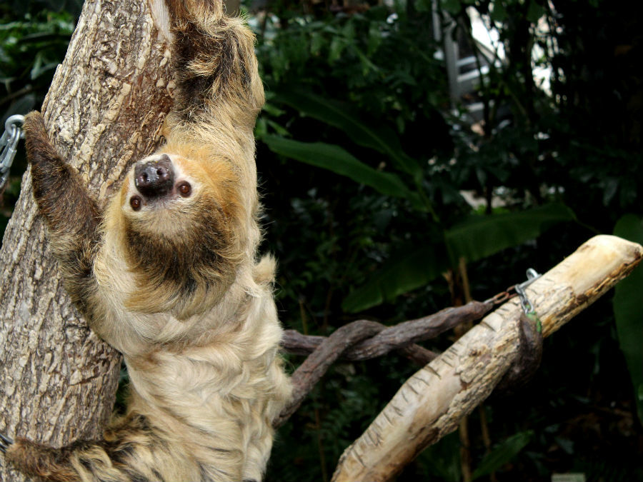 On International Sloth Day the Cincinnati Zoo recounts the confusing ...
