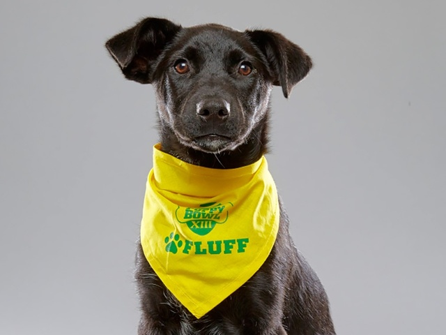 Pup from Hamilton rescue playing in 2017 Puppy Bowl - WCPO Cincinnati, OH