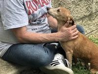 Meet Lt. Dan, among 18 pups rescued from SE Ohio
