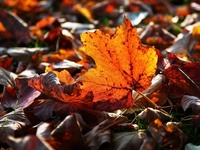 Ready to get dead leaves out of your yard?